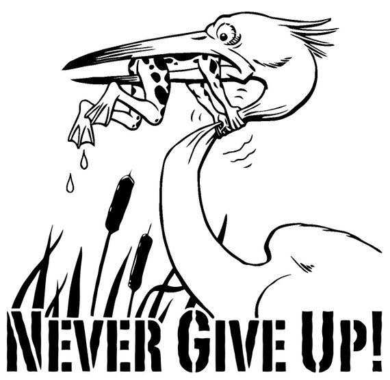 570x555 Don'T Give Up Frog Heron Car Bumper Vehicle Sticker