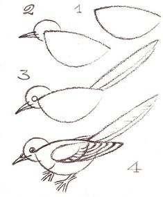 235x285 Great Tips On How To Draw A Bird!