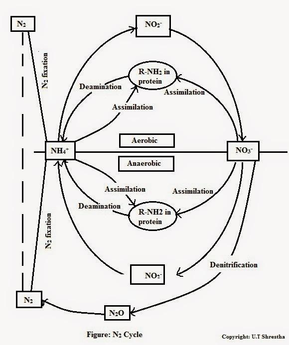 N2 Diagram