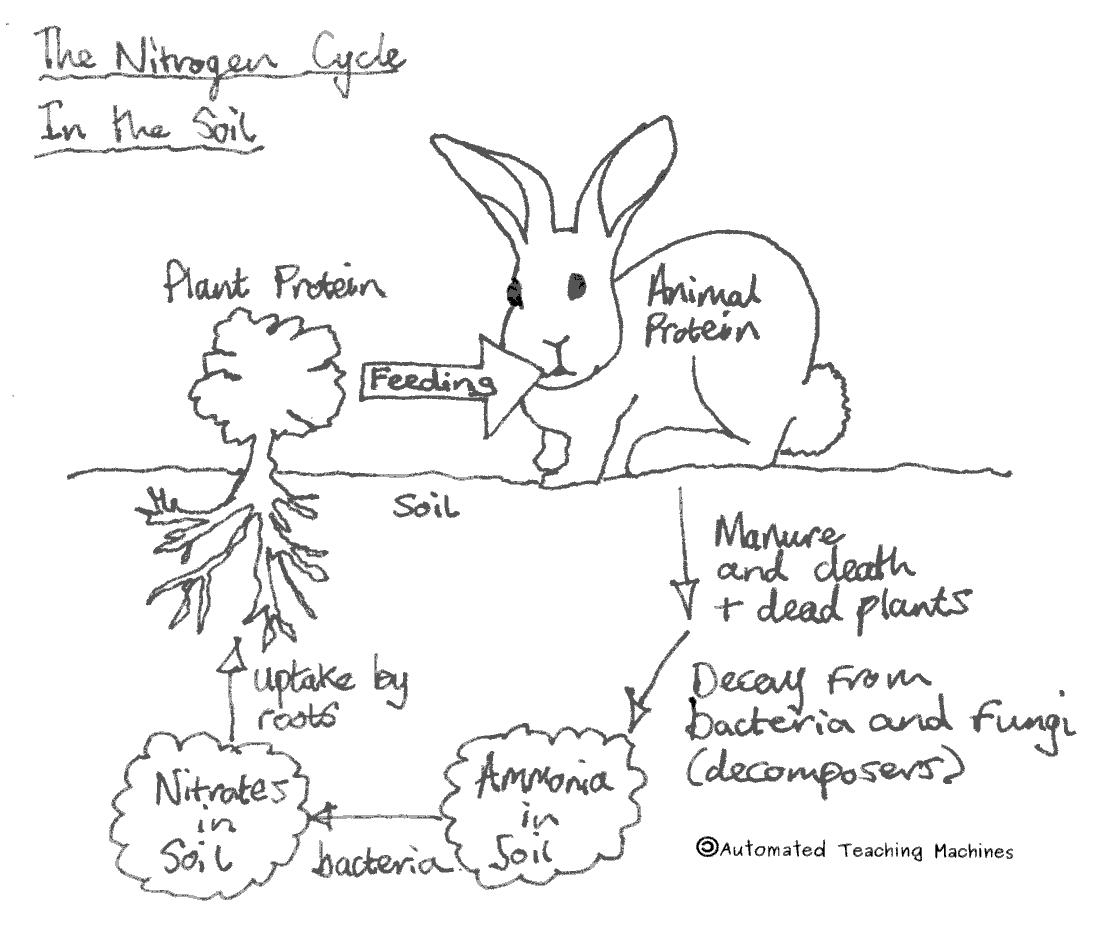 Nitrogen drawing at getdrawings free for personal use nitrogen 1104x934 diagram nitrogen cycle awesome the nitrogen cycle seeking for a ccuart Image collections