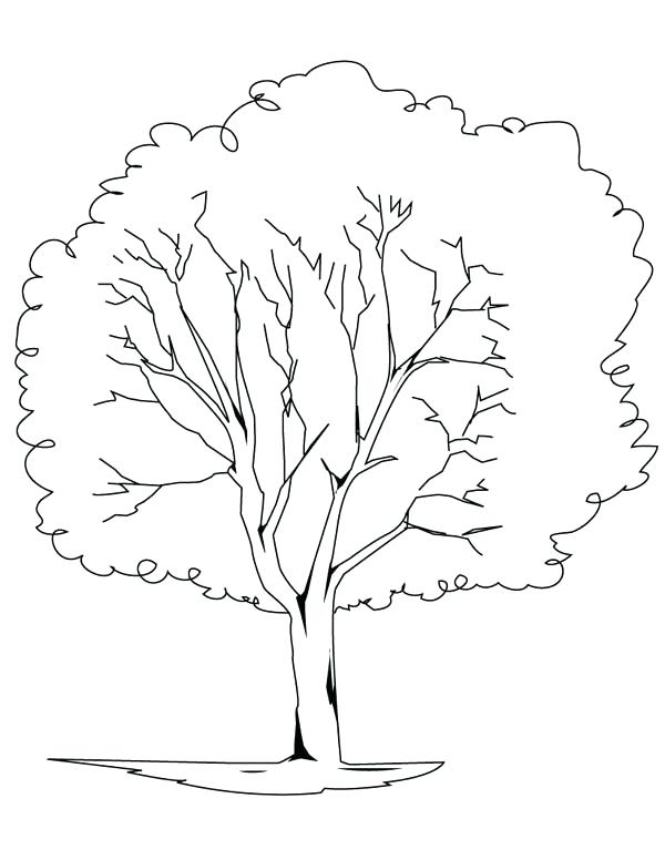 600x776 Oak Tree Coloring Page Clip Arts Related To Oak Tree Outline Oak