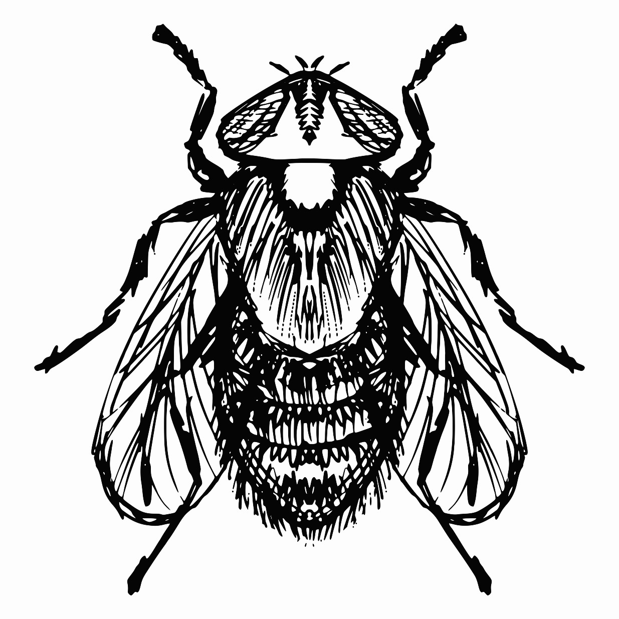 1235x1235 Ordinary Fly Printable Image Illustration Sketch For Ordinary Fly