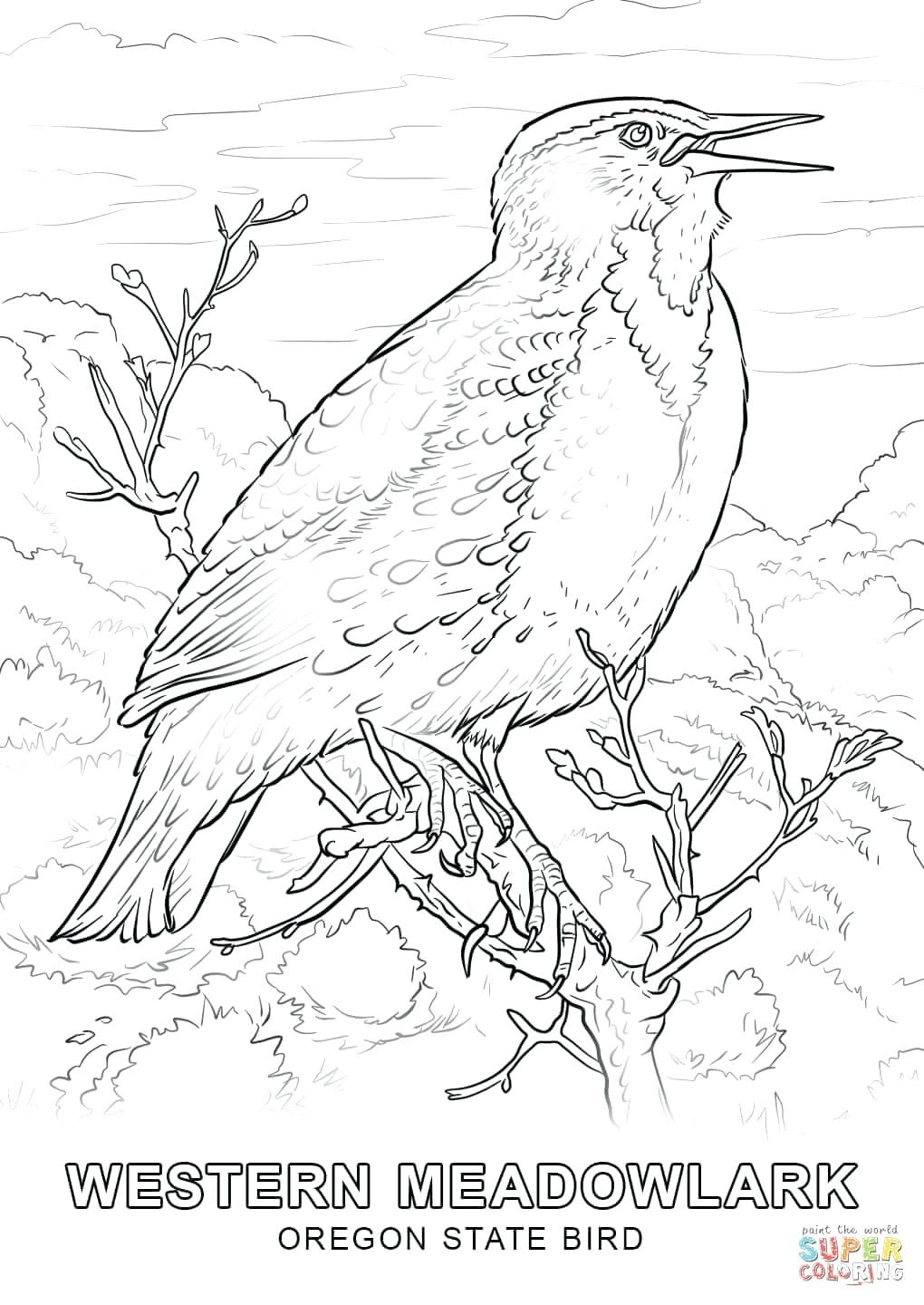 1020x1440 Click The State Bird Coloring Pages To View Printable Version