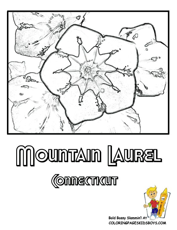 612x792 Connecticut State Flower Coloring Page Color Bros