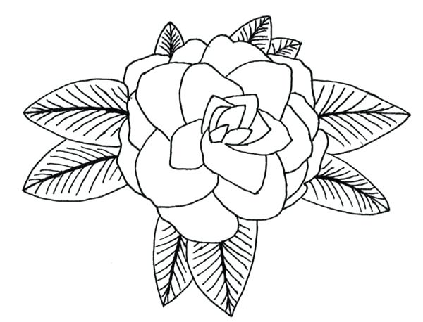 600x458 Drawing At Free For Personal Use Drawing Ohio State Tree Coloring