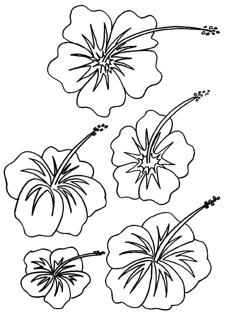 731x1024 Free Printable State Flower Coloring Pages Click To See Printable
