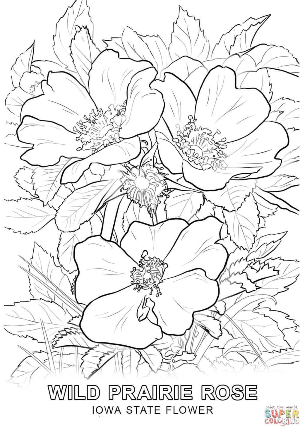 1020x1440 Huge Gift Iowa State Bird Coloring Page Flower Free Printable
