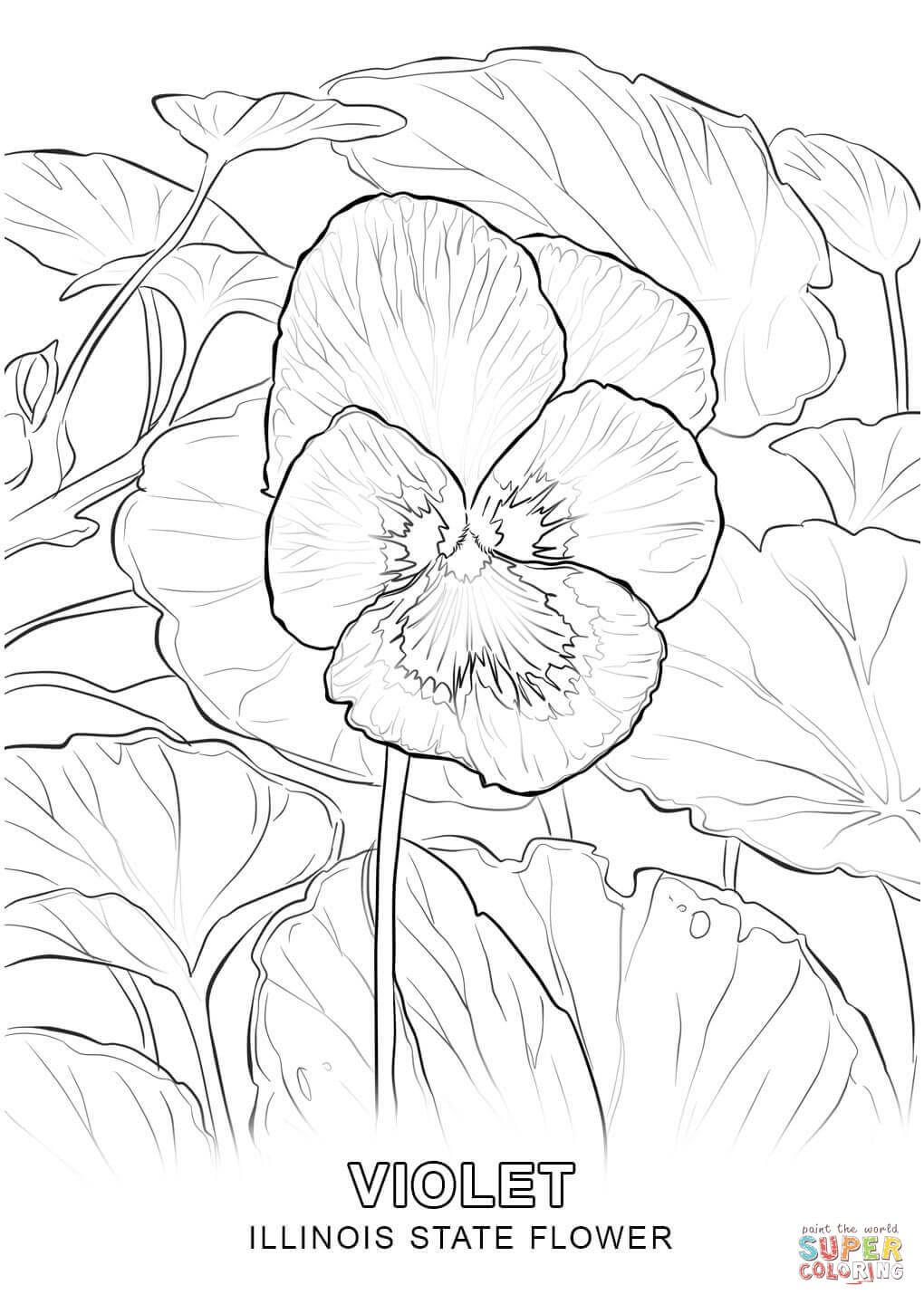 1020x1440 Illinois State Flower Coloring Page Fun Time