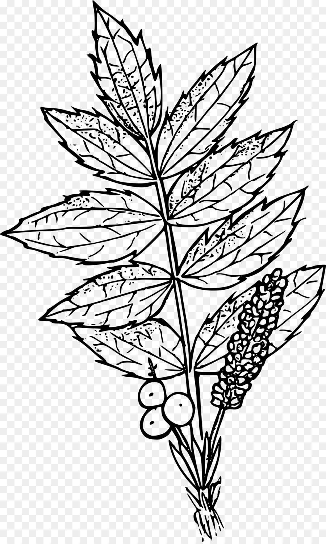 900x1500 Oregon Grape Drawing Clip Art