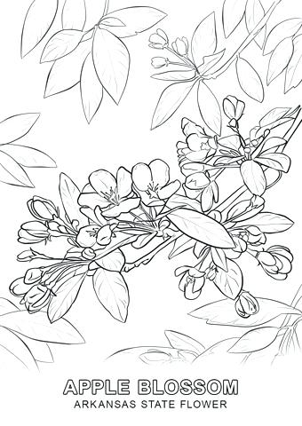 340x480 State Flower Coloring Pages State Bird And Flower Coloring Pages