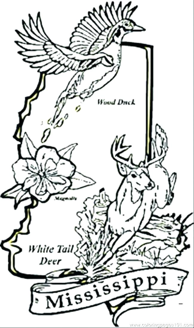 650x1099 State Flower Coloring Pages State Flower State Symbols Coloring