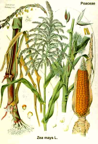 406x596 Css 330 World Food Crops