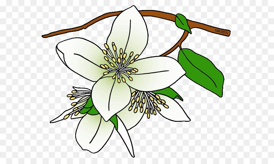 900x540 Syringa State Flower Drawing Clip Art