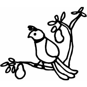 300x300 Partridge In Pear Tree Coloring Page