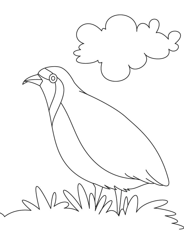 720x954 Quail Coloring Page Partridge A Hungry Coloring Page God Sends