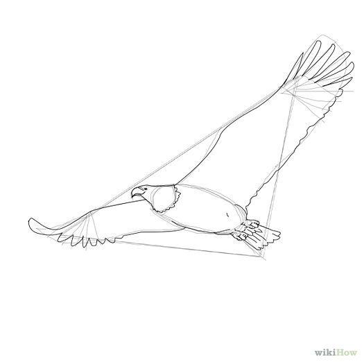 525x525 Draw A Bald Eagle Bald Eagle, Eagle And Drawing Birds