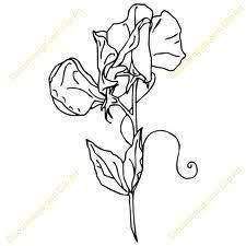 225x225 How to draw a sweet pea flower Sweet Pea Design Exchange