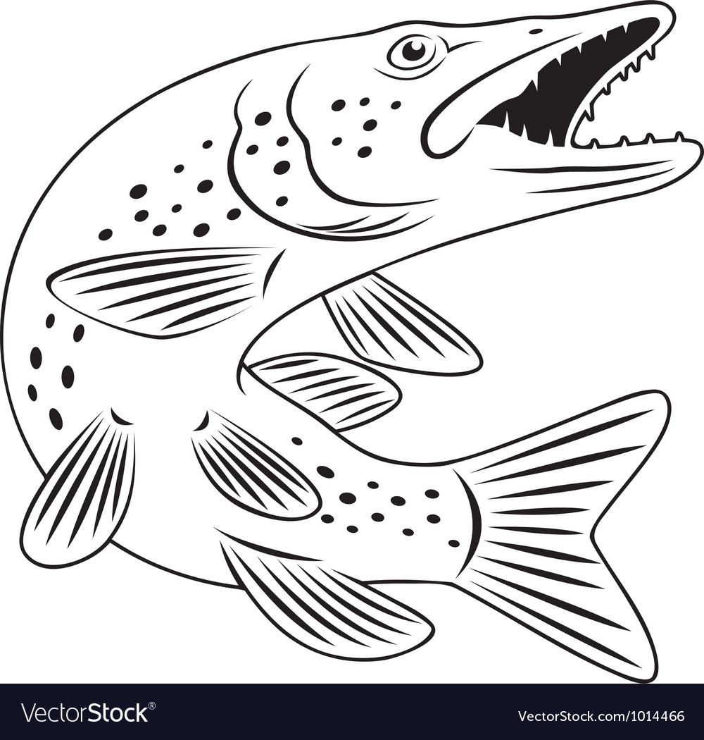 Pike Drawing