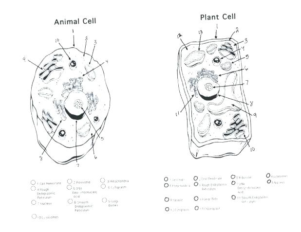 Plant Cell Drawing With Labels