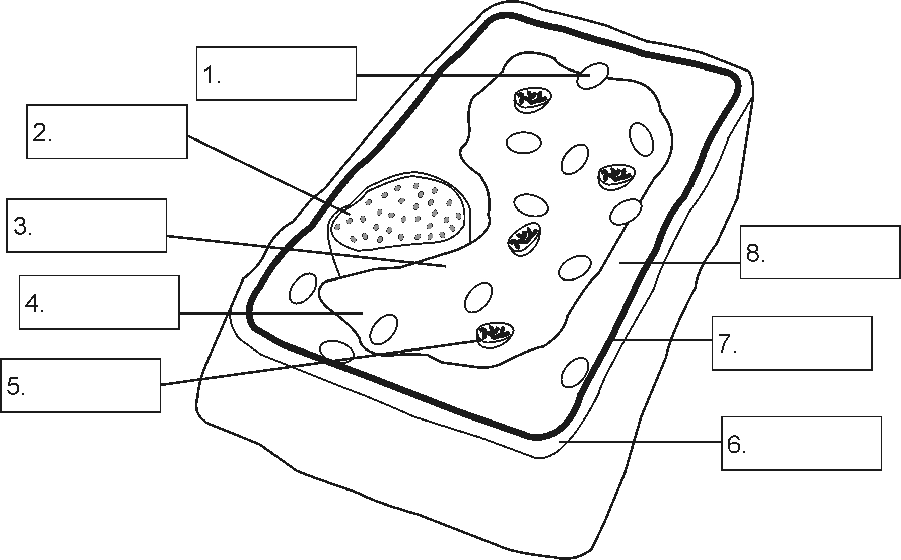 Plant Cell Drawing With Labels At Free For Label Diagram Together Worksheet 1789x1112 Structure Of A