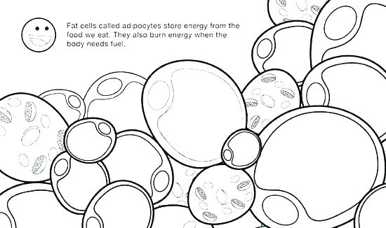 Plant Cell Drawing With Labels At Getdrawings Com