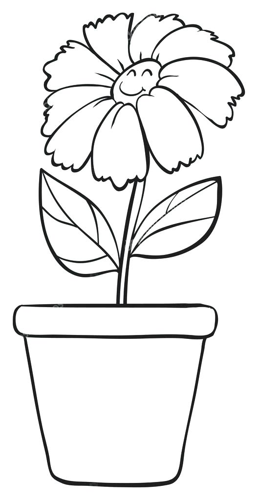 Plant In Pot Drawing