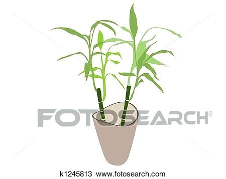 450x357 Bamboo Plant Pot Bamboo Tree In Plastic Pot Bamboo Plant Pot Stand