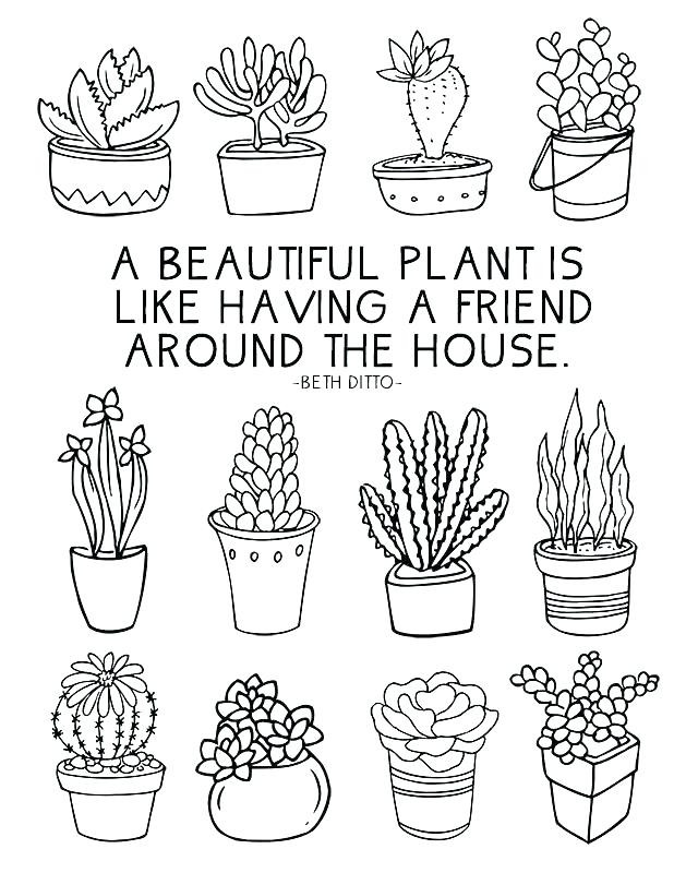 the best free plant drawing images  download from 50 free