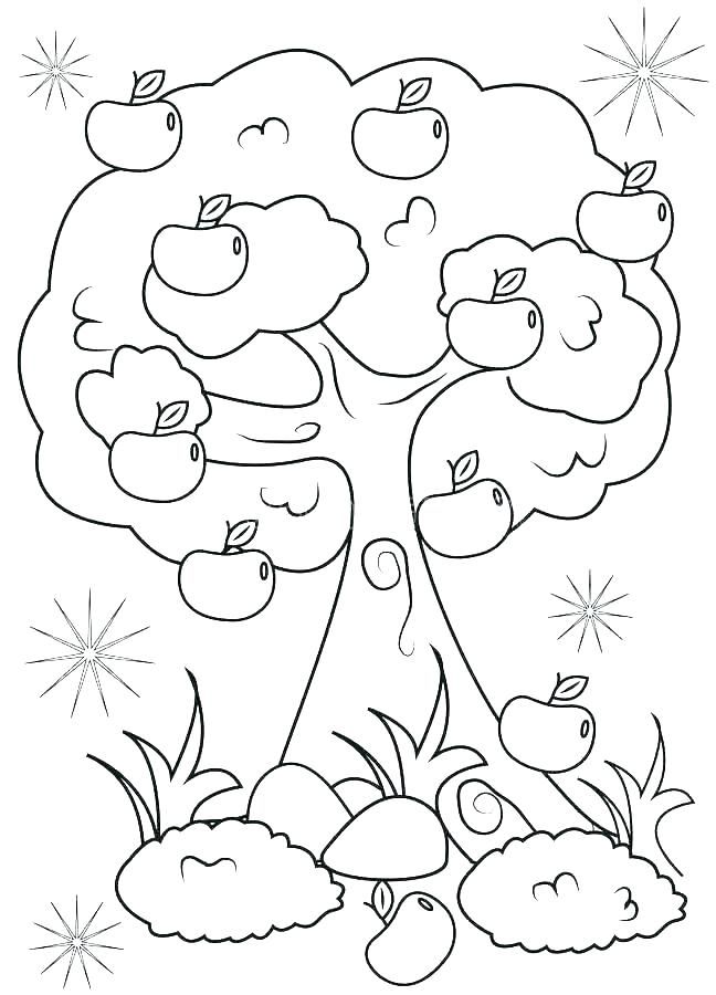 648x900 Plant Life Cycle Coloring Page Plant Life Cycle Coloring Page