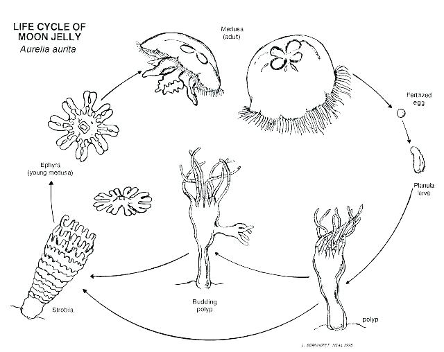 640x508 Plant Life Cycle Coloring Page Plant Life Cycle Coloring Page Free