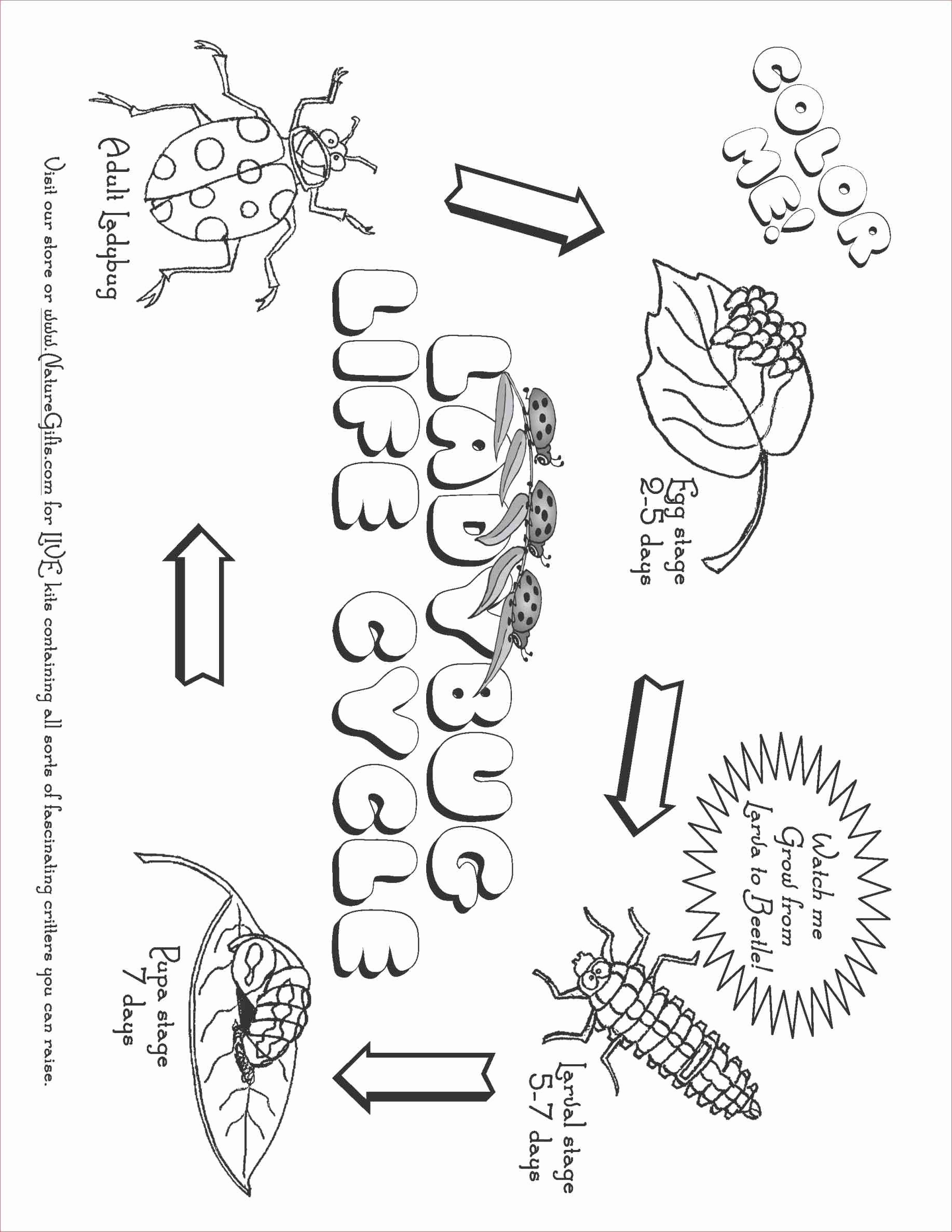 Plant Life Cycle Drawing At Getdrawings Com Free For