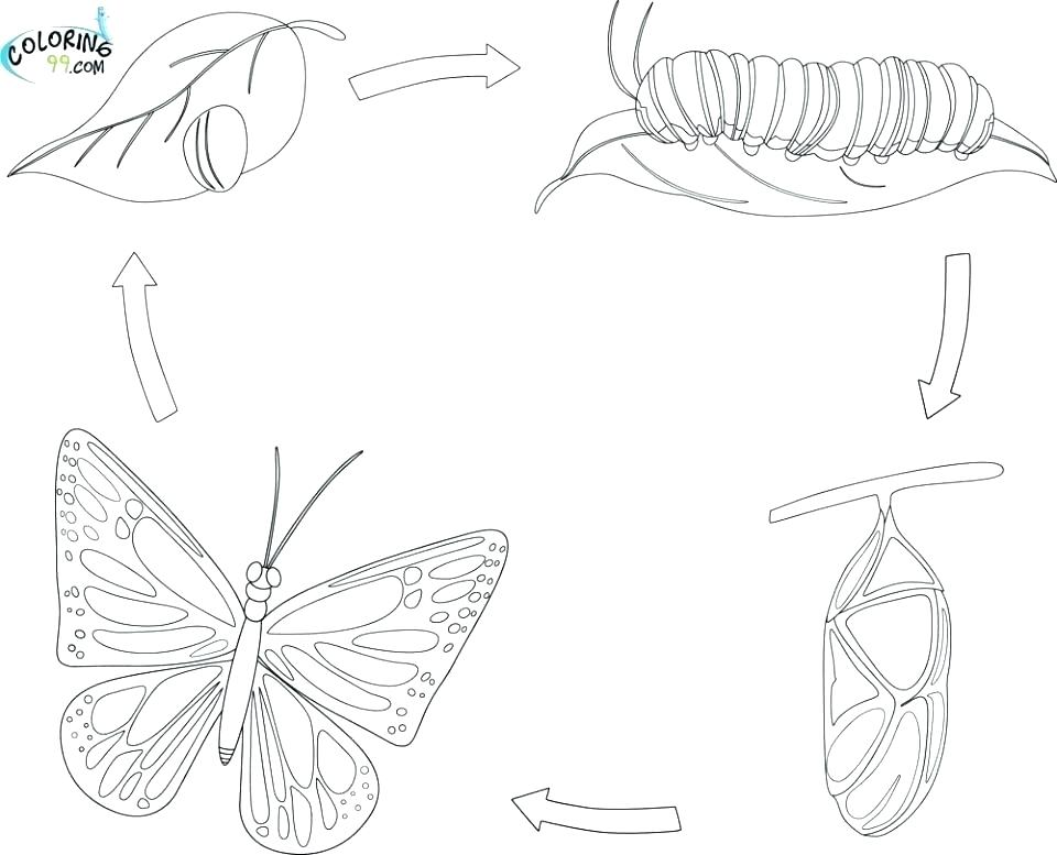Plant Life Cycle Drawing At Getdrawings Free For Personal Use