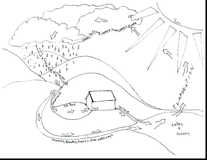 700x541 Amazing Water Cycle Coloring Page For Plant Life Cycle Coloring
