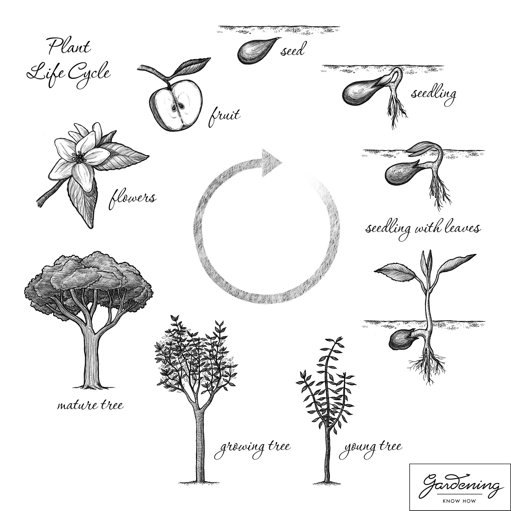 2100x2100 Basic Plant Life Cycle And The Life Cycle Of A Flowering Plant