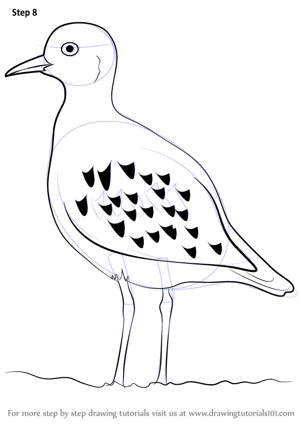598x844 Learn How To Draw A Golden Plover (Birds) Step By Step Drawing