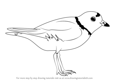 394x279 Plover Drawing, Pencil, Sketch, Colorful, Realistic Art Images