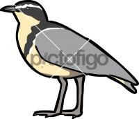 200x172 Egyptian Plover Freehand Drawing From Pictofigo