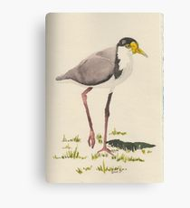 210x230 Plover Drawing Canvas Prints Redbubble
