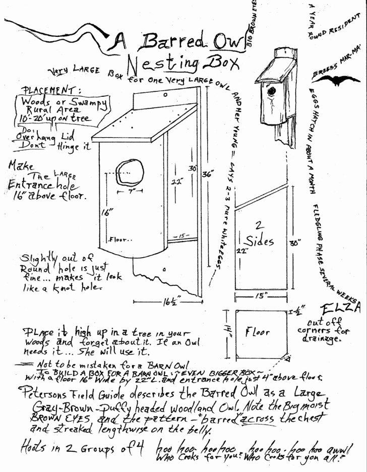 728x936 Barred Owlse Plans Birdhouse Nest Boxseplans Great Horned Unique