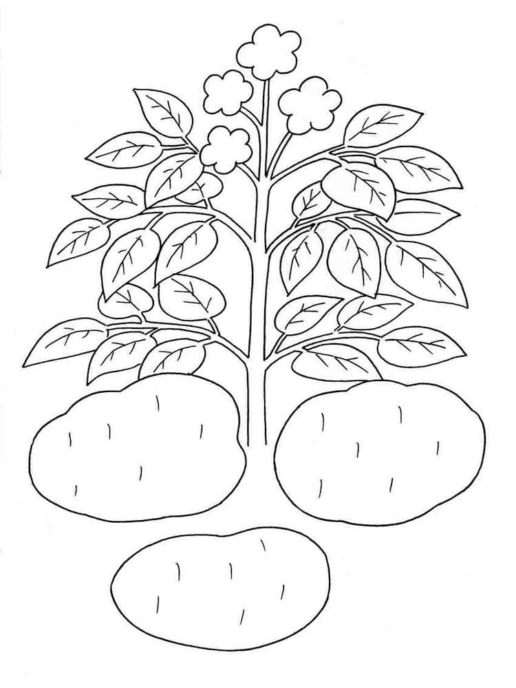 750x1000 Potato Coloring Pages. Download And Print Potato Coloring Pages