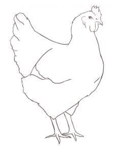 228x302 15 Best Chickens Images On To Draw, Cartoon Chicken