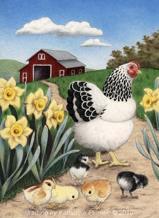 509x700 Katherine Pumer Fine Art Chicken Drawing