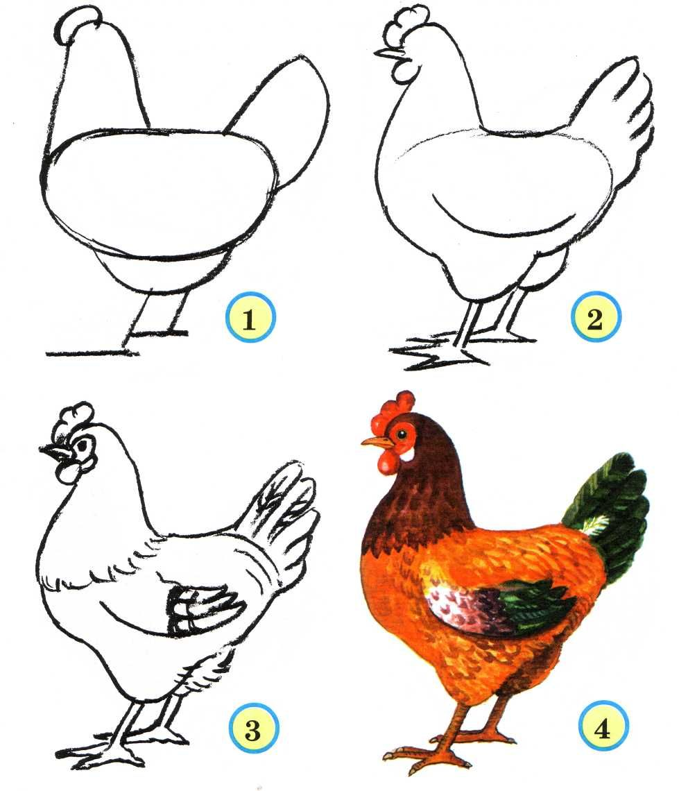 979x1140 How To Draw A Chicken How To Draw .
