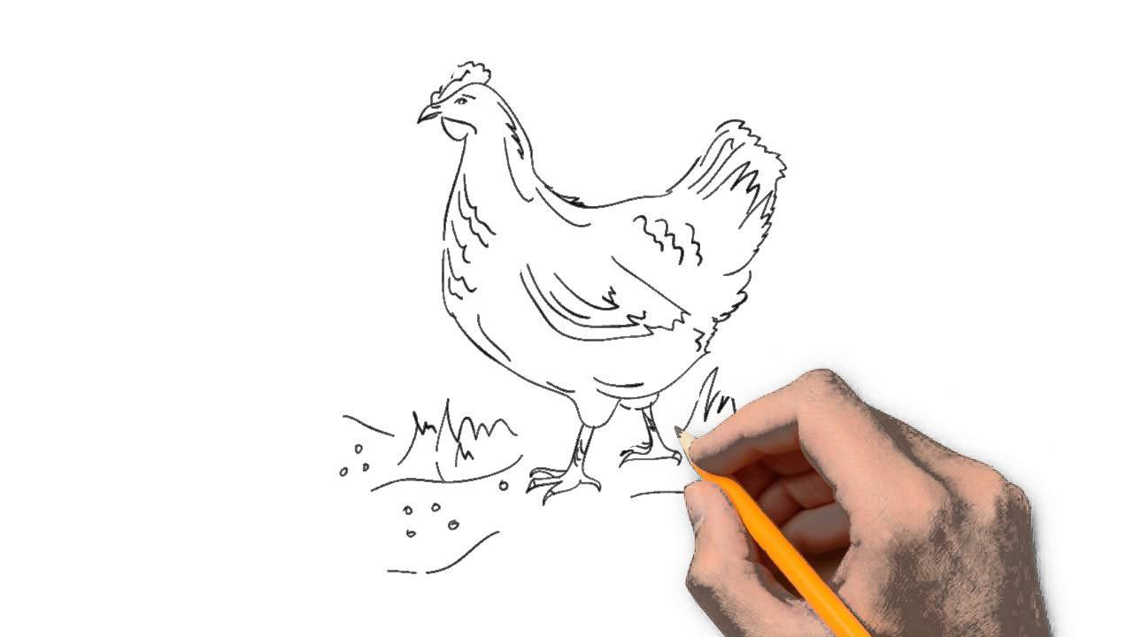 1280x720 Poultry Animals Pencil To Draw Step By Step