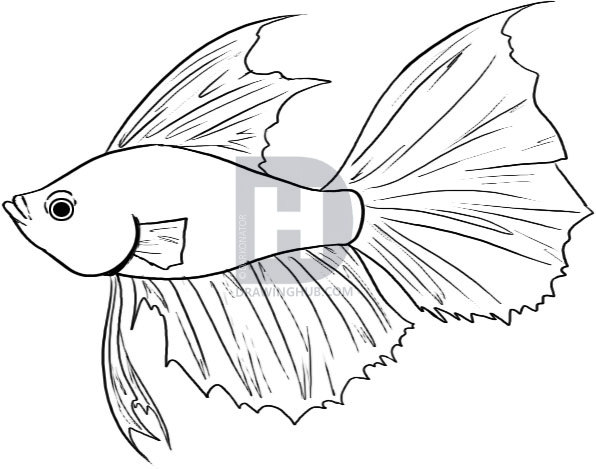 596x469 How To Draw A Betta, Step By Step, Drawing Guide, By Darkonator