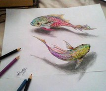 215x185 Drawing + Fish Images
