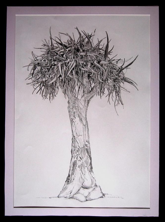 667x900 Quiver Tree Drawing By Victor Harley