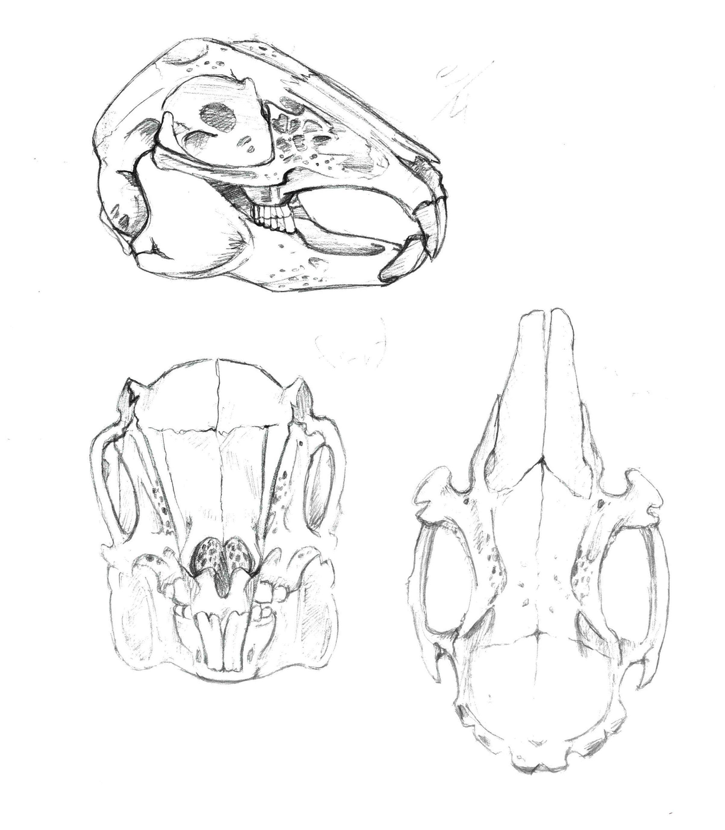 2409x2758 Image Result For Rabbit Skull Drawing Tattoo