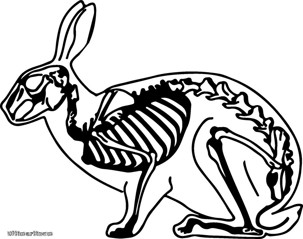 1024x807 The Scary Skeleton Bunny 5 Steps (With Pictures)