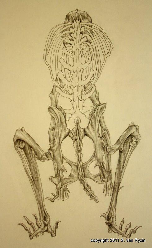 490x800 Rabbit Skeleton Diagram Rabbit Skeleton. Animals Cool Aniamls